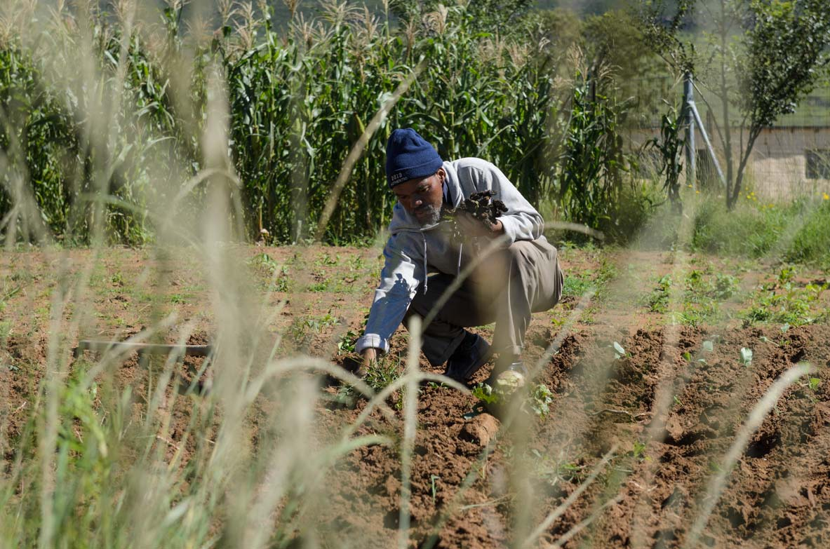Land Reform: What's the plan?  RESPONSE TO THE BUDGET SPEECH TABLED BY MINISTER GUGILE NKWINTI